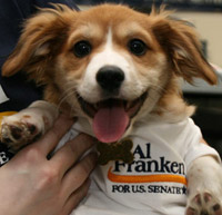 election-franken dog