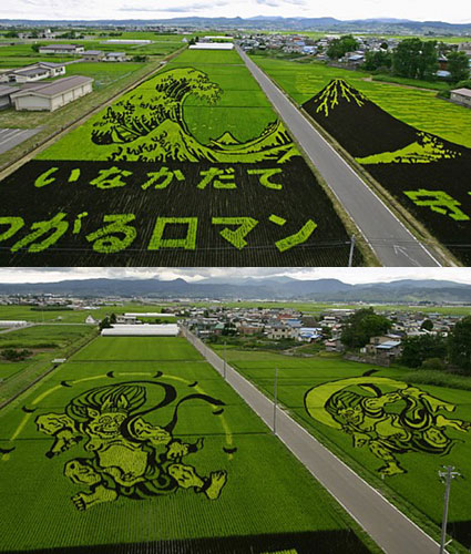 rice-paddy art