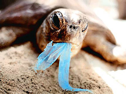 turtle-eating-plastic bag
